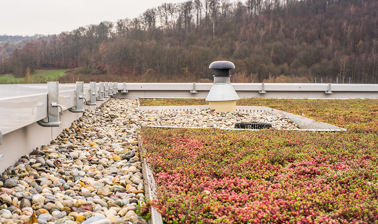 Photo d'une toiture végétalisée, aménagée par CLS Étanchéité dans l'Indre-et-Loire (37)